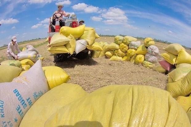 Les exportations de riz a l'etranger en hausse hinh anh 1