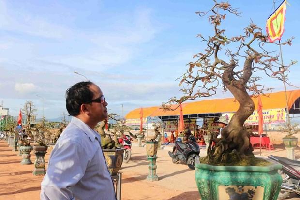 Les villages d'abricotiers de Nhon An a l'approche du Tet hinh anh 2
