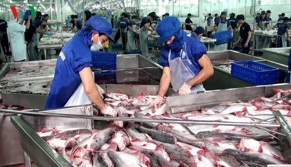 Exportations des poissons tra vers la Chine en baisse de 50% hinh anh 1
