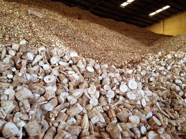 1er trimestre: croissance des exportations vietnamiennes de manioc et de produits derives hinh anh 1