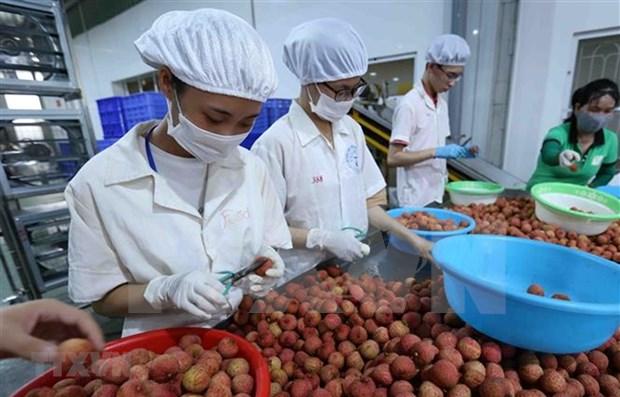 Le Vietnam et le Japon discutent de la stimulation du commerce des biens de consommation hinh anh 1