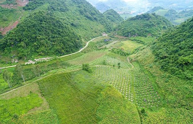 Plantation des arbres fruitiers du dragon - Direction prospective des minorites de Son La hinh anh 1