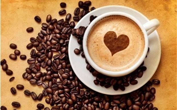 Le cafe, premier produit vietnamien d'exportation vers l'Algerie hinh anh 1
