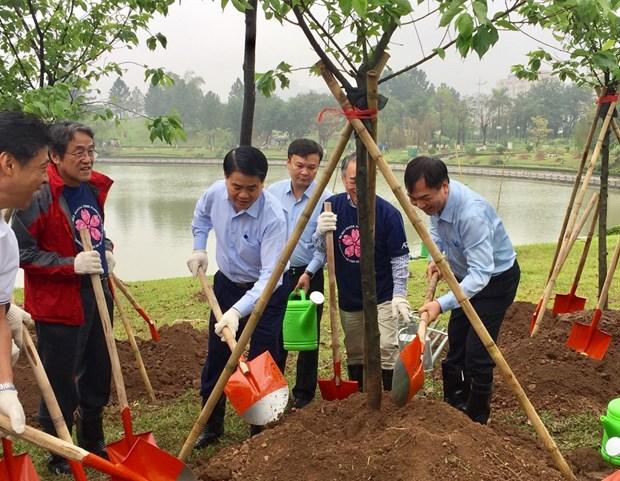 Plantation de 1.000 cerisiers du Japon dans le parc Hoa Binh a Hanoi hinh anh 1