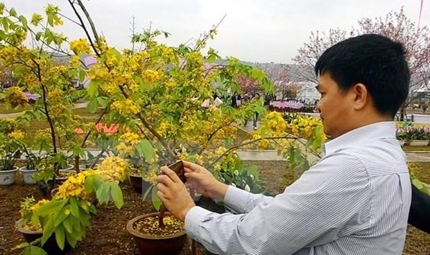 Lancement de la Fete des fleurs de cerisier et d'abricotier jaunes Yen Tu 2019 hinh anh 1