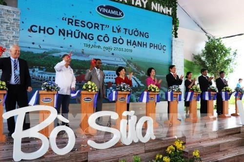 Vinamilk inaugure la plus grande ferme de vaches laitieres du Vietnam a Tay Ninh hinh anh 1
