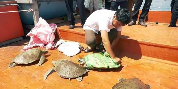 Relacher des tortues rares dans la nature hinh anh 1