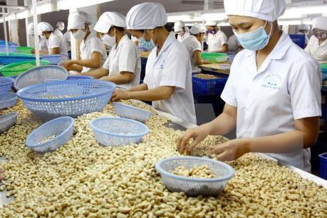 La Cote d'Ivoire souhaite cooperer avec Binh Phuoc dans la transformation de la noix de cajou hinh anh 1