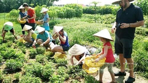 Promotion de l'agrotourisme a Ho Chi Minh-Ville hinh anh 1