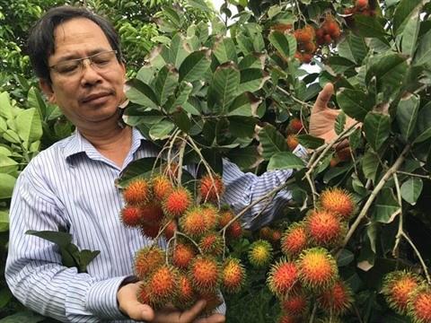 Nouvelle tendance du secteur cosmetique : opportunites pour le ramboutan du Vietnam hinh anh 1