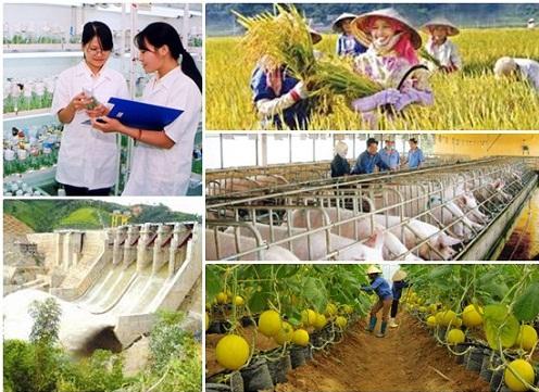 L'agriculture continue de croitre malgre la peste porcine africaine hinh anh 1