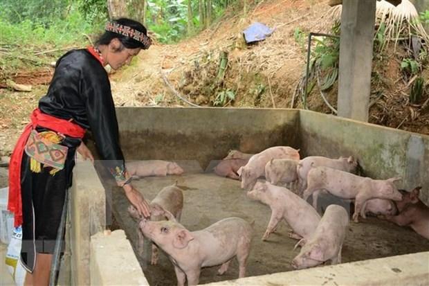 Le Vietnam empeche activement la propagation de la peste porcine africaine hinh anh 1