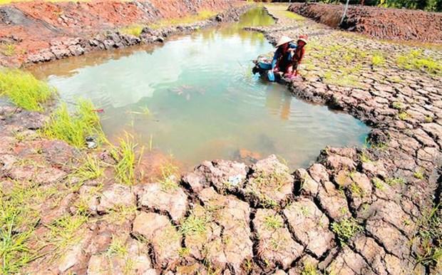 Changement climatique: creer des modeles de subsistance pour les habitants de Tra Vinh hinh anh 1