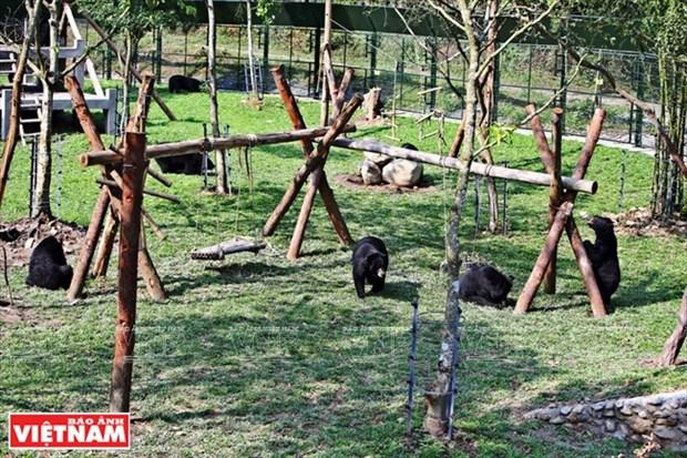 Centre de sauvetage des ours de Tam Dao, dans la province de Vinh Phuc hinh anh 1