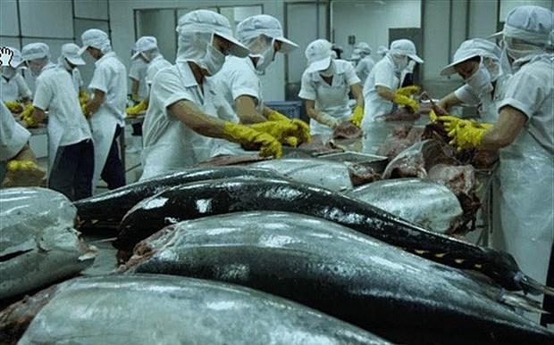 Les exportations de thon augmentent de 10% en 2019 hinh anh 1