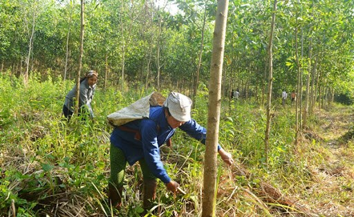 Quang Tri encourage la gestion durable des forets en reponse au changement climatique hinh anh 1