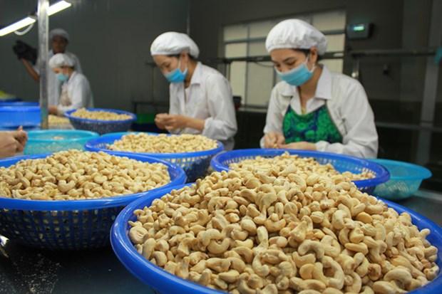 Le COVID-19 plombe les exportations vietnamiennes de noix de cajou hinh anh 1