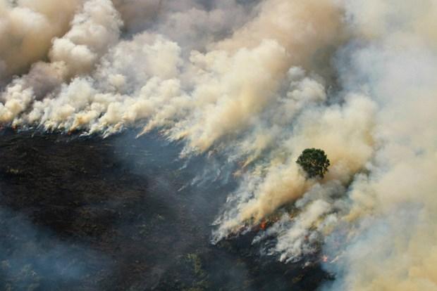 La Thailande, le Myanmar et le Laos discuteront des mesures de lutte contre la brume hinh anh 1