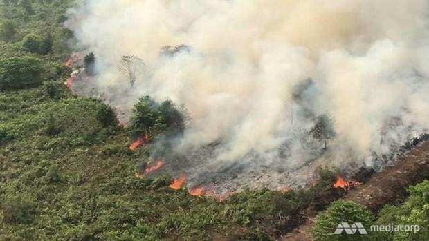 Les incendies de foret compliquent le combat contre le COVID-19 en Indonesie hinh anh 1