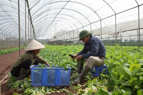 Promouvoir la croissance de l'agriculture de Hanoi hinh anh 1