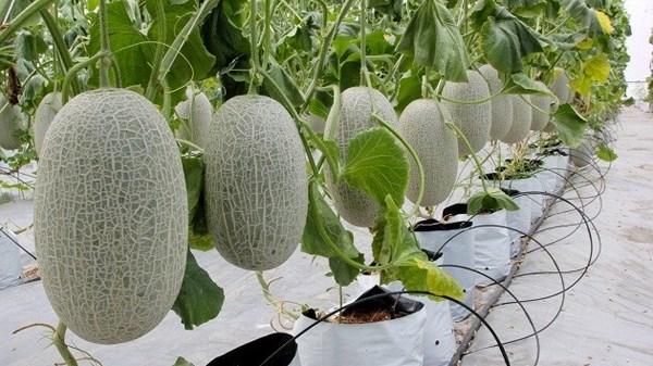 La province de Bac Giang cherche a accelerer l'agriculture de haute technologie hinh anh 1