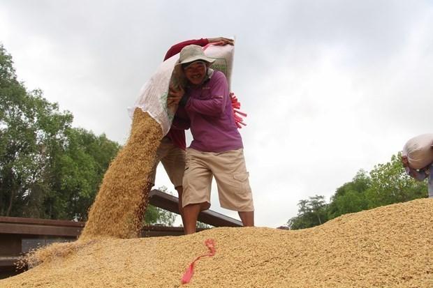 Le prix du riz du Vietnam tombe a 450 dollars par tonne hinh anh 1