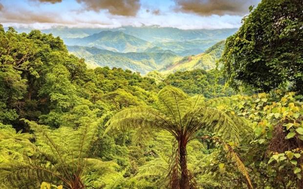 Creation de la reserve naturelle de Dong Chau - Khe Nuoc Trong dans la province de Quang Binh hinh anh 1