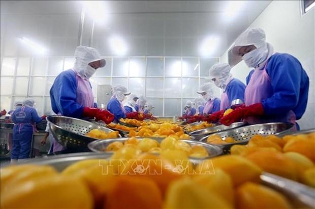 La politique fiscale et les procedures douanieres lors de la mise en œuvre de l'EVFTA hinh anh 1