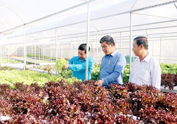 L'ile de Phu Quoc developpe une agriculture ecologique liee au tourisme hinh anh 1