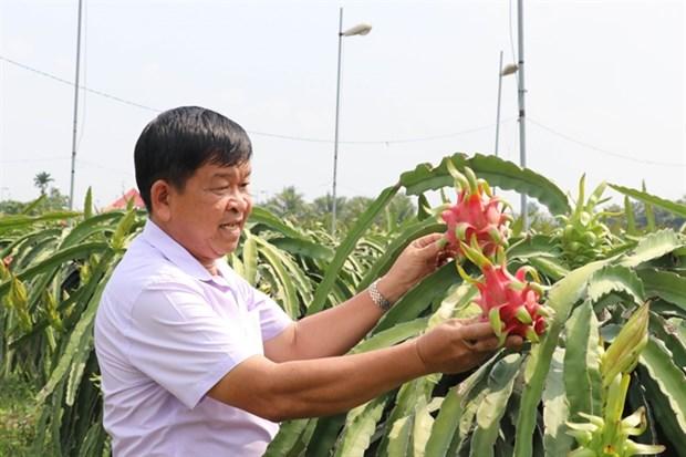 Long An s'efforce d'avoir 3.000 ha de fermes de fruits du dragon repondant aux normes VietGap hinh anh 1