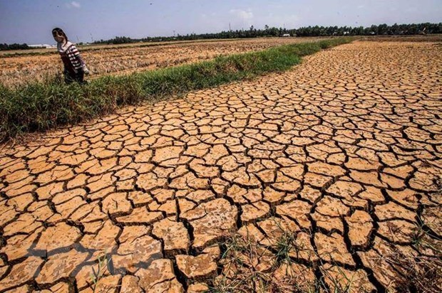 Des efforts considerables sont necessaires pour aider le delta du Mekong a surmonter la secheresse hinh anh 1