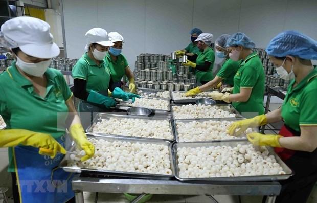 Les exportations de fruits et legumes chutent de 11% en neuf mois hinh anh 1