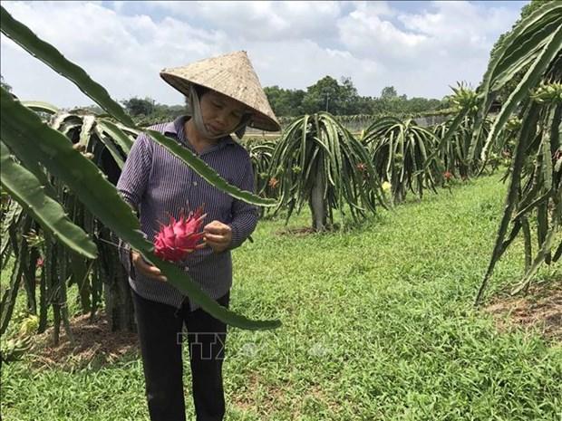Toutes les communes de Vinh Phuc repondent aux normes de la Nouvelle ruralite hinh anh 1