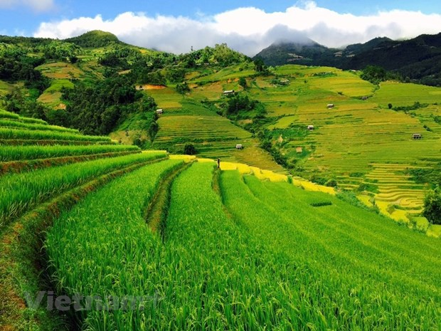 Mu Cang Chai: La beaute pittoresque du Nord-Ouest captive les touristes hinh anh 1