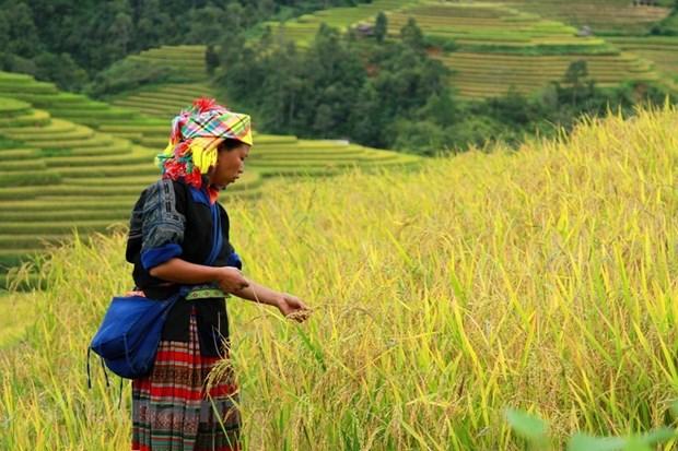 Mu Cang Chai: La beaute pittoresque du Nord-Ouest captive les touristes hinh anh 2