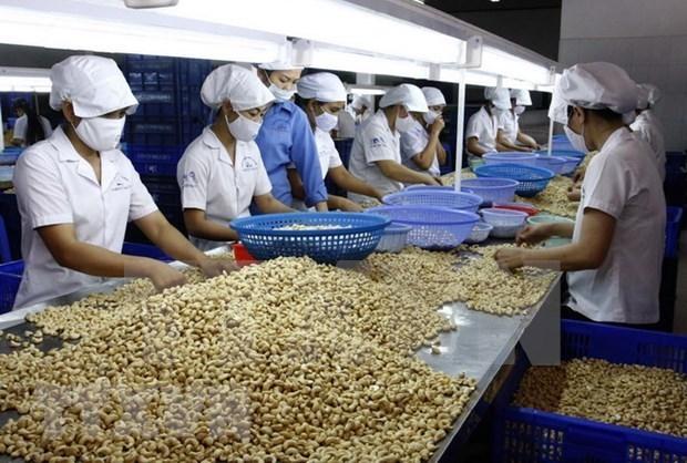 Les Pays-Bas vont investir dans la filiere de la noix de cajou a Binh Phuoc hinh anh 1