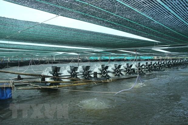 Exportations de crevettes: profiter des opportunites pour prendre l'essor en 2021 hinh anh 1