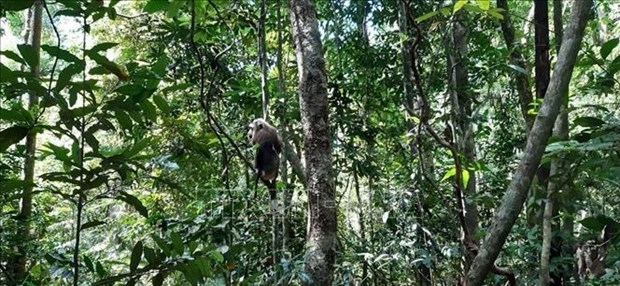 Trois animaux sauvages relaches dans le Parc national de Bu Gia Map hinh anh 1