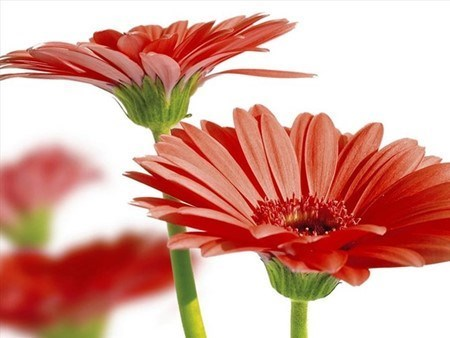 Quelles plantes allez-vous choisir pour le Tet ? hinh anh 4
