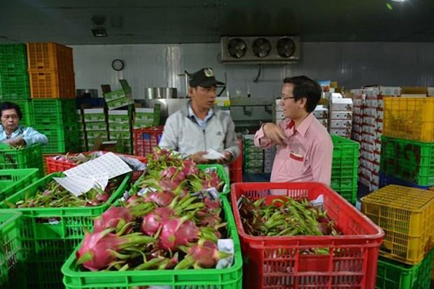 La croissance des exportations de produits agricoles ne s'avere pas durable hinh anh 1