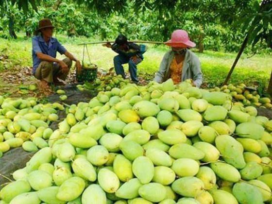Les fruits locaux s'efforcent de reconquerir le marche national hinh anh 1