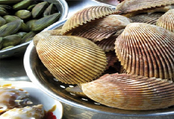 Augmentation des exportations de mollusques bivalves en UE hinh anh 1