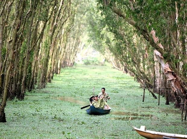 La foret de Tra Su, ecosysteme a part entiere du Delta du Mekong hinh anh 1