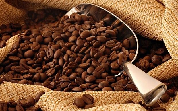 Large opportunite pour les exportations de cafe vers l'UE hinh anh 1