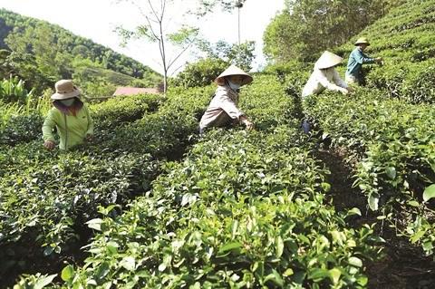 Les cooperatives agricoles, plateformes de la croissance economique a Thanh Hoa hinh anh 1