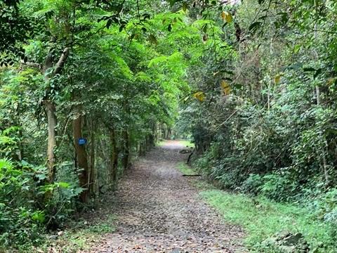 L'economie forestiere, un atout de Vinh Phuc hinh anh 1