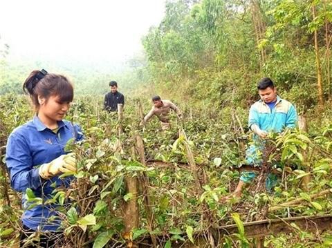 L'economie forestiere, un atout de Vinh Phuc hinh anh 2