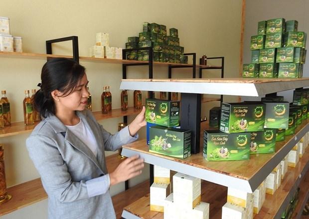Ho Thi Kim Oanh et le the au « ginseng du pauvre » de Ngoc Linh hinh anh 1
