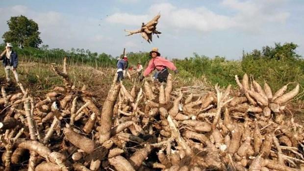 La BAD approuve 70 millions de dollars pour l'agriculture cambodgienne hinh anh 1