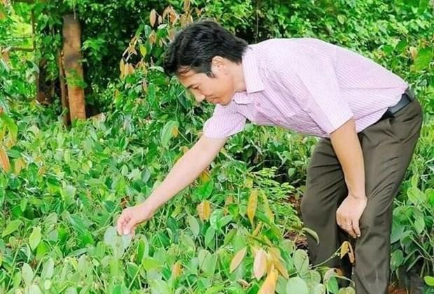 Bau May, la marque vietnamienne de poivre la plus chere hinh anh 2